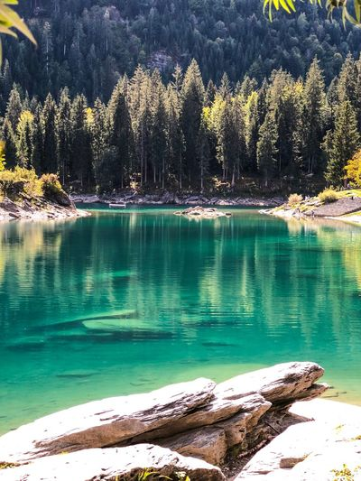Water Plant Tree Beauty In Nature Tranquility Tranquil Scene Scenics - Nature Lake Nature Mountain Outdoors Idyllic My Best Travel Photo