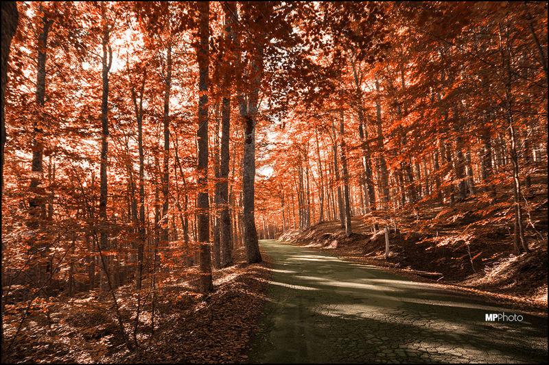 Autumn Colors Autumn Collection Autumn Autumn Colours