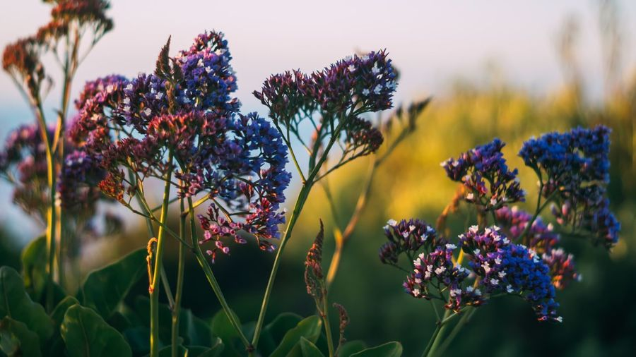 EyeEm Selects Flower Growth Nature Plant Purple Beauty In Nature Fragility No People Freshness Outdoors Day Close-up Flower Head
