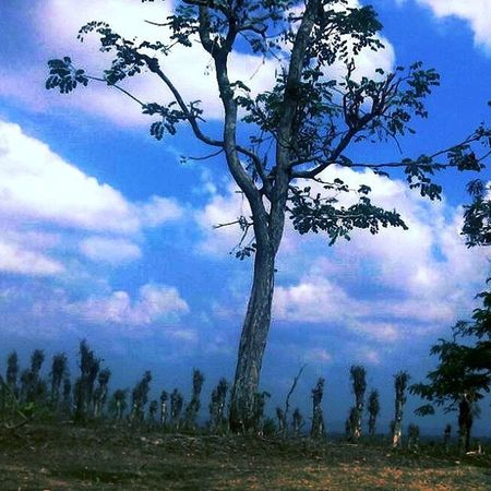 Tegak Sky Nature Clouds Tree Strong Powerful Ahead