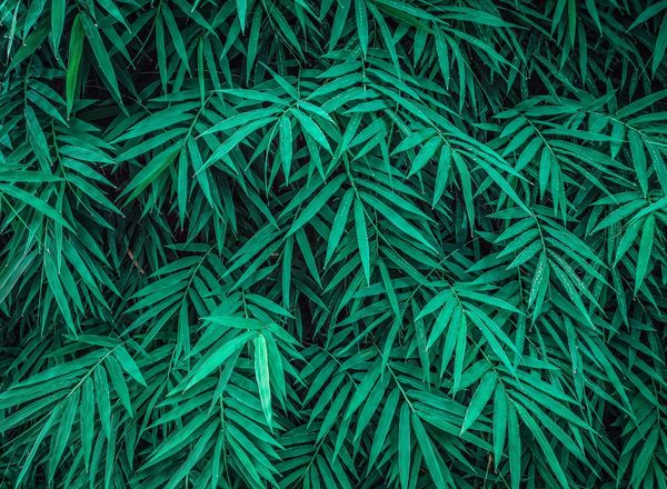 I feel greennn Bamboo Shotononeplus6 Leaf Leaves Oneplusphotography Onepluslifestyle NeverSettle Naturelovers Naturelife Green Backgrounds Full Frame Tree Close-up Green Color Greenery