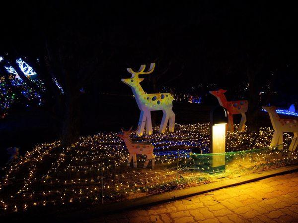 Yeosu Yeosu Cable Car Dolsan Park Light Night Lights Night Photography Olympus E-P3 Zuiko 14-54mm II Olympus Photography