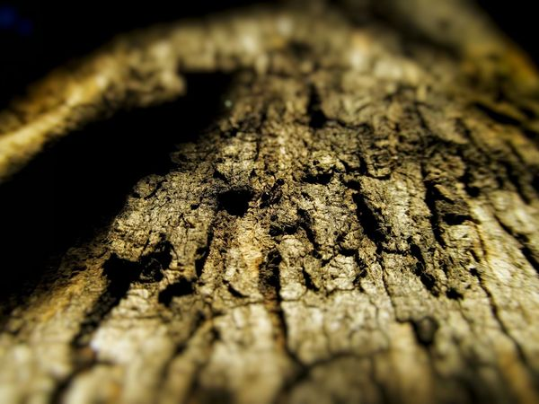 keep moving Nature Photography Nature In Wild Untouchednature Low Angle Photo Bug's View Natural Pattern Natural Light Ant Photography Barks Of A Tree Bark Texture Sunlight And Shadow Close-up Textured  No People Sunlight Day Outdoors Nature