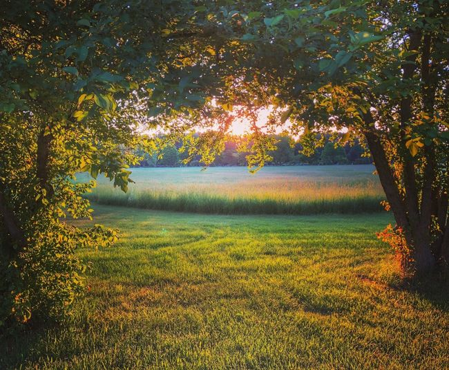 Sunrise Beauty In Nature Sunrise - Dawn Sunrise In Field Early Morning