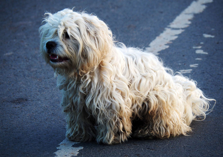 Close-up of a dog standing on road