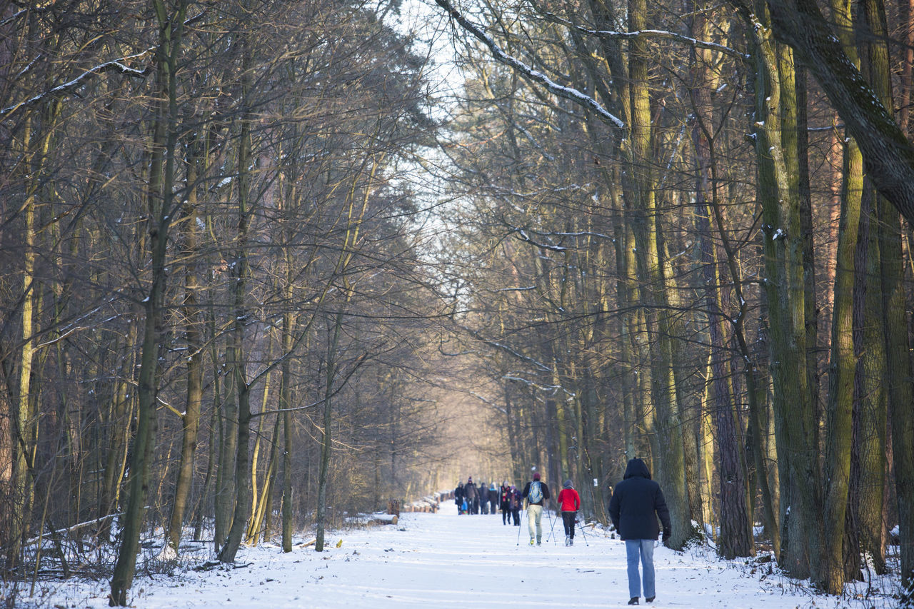People Walking On Snow Covered Field In Forest