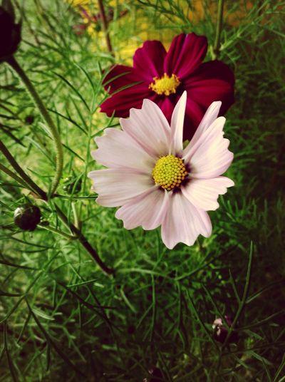 花卉展 First Eyeem Photo