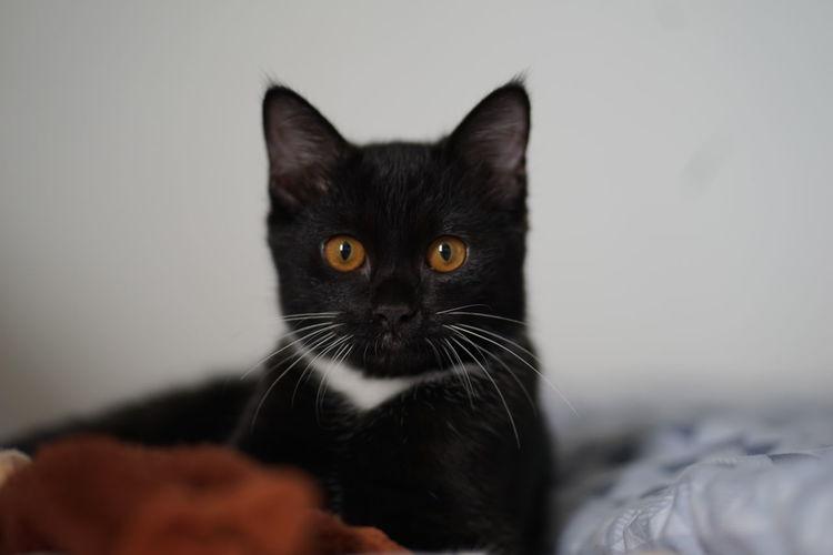 Black cat on