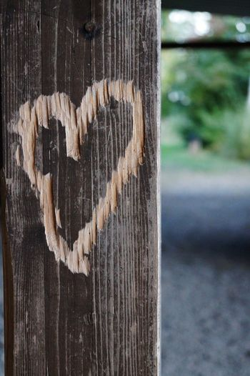 Focus On Foreground Heart Heart Shape Liebesbeweise Love Message Outdoors Wood - Material Sonya58 Sony Alpha Schwabenland Bayern Germany