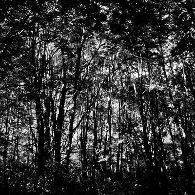 Sony Nex5n Nex Skopar 21mm newzealand bush forest bw bnw bnw_society blackandwhite monochrome