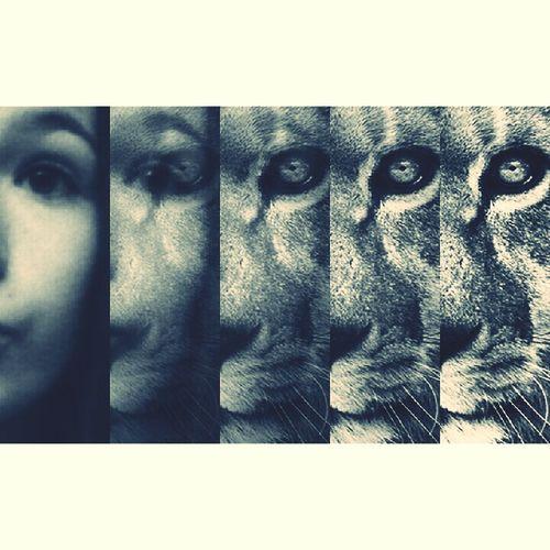 Louder than a lion.. First Eyeem Photo