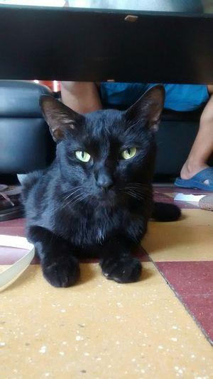 Kero Cat