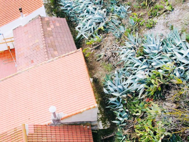 Aerial Shot High Angle View Day Outdoors No People Building Exterior Architecture Nature