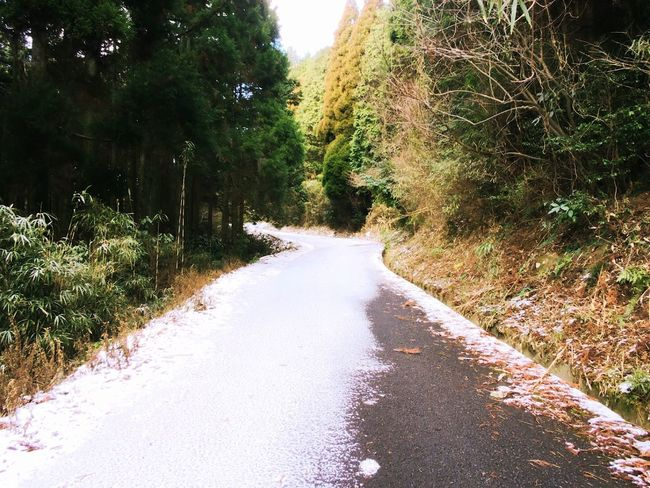 Winter Snow 冬 雪 山道 山 Tree The Way Forward Road Day Nature No People Outdoors Beauty In Nature