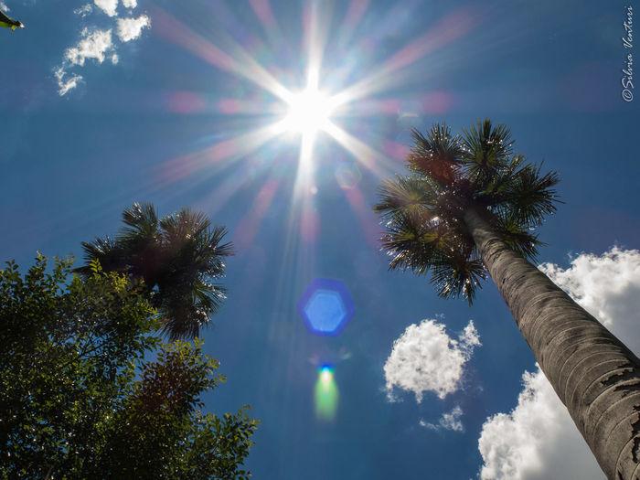 Buriti Beauty In Nature No People Palm Tree Sky Sun Tree