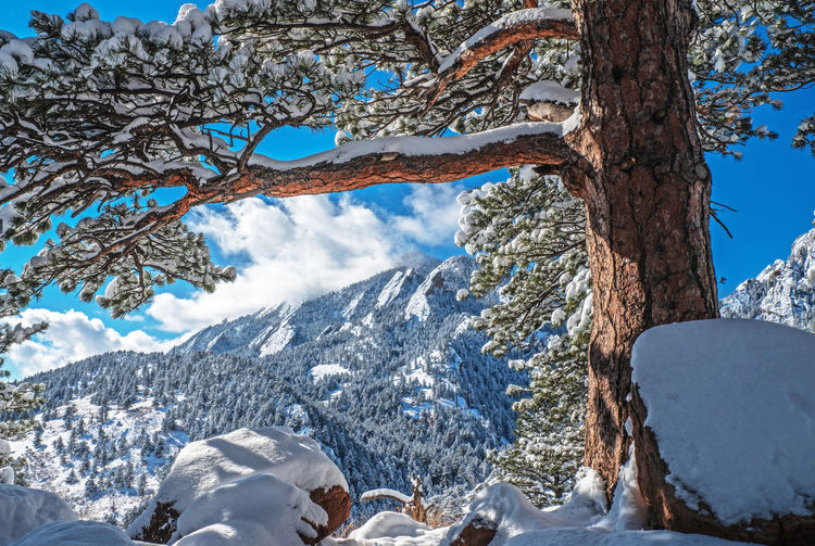 Boulder Colorado Boulder Snow Winter Wonderland Flatirons Rocky Mountains Colorado Cold Temperature Winter Tree Beauty In Nature Plant Trunk Tree Trunk Scenics - Nature Day Nature Tranquility Mountain White Color Tranquil Scene Sky No People Snowcapped Mountain Frozen Outdoors
