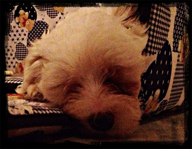 Ulisse Susio - having a sleep