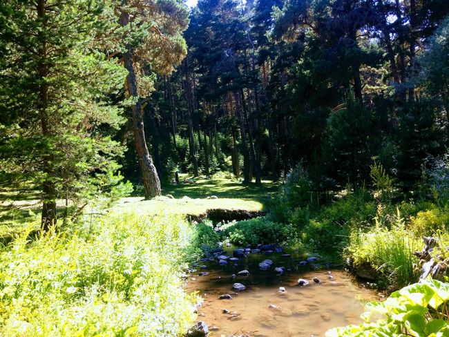 Nature Water Outdoors Growth Tree Day No People Beauty In Nature Tranquility Plant Forest Grass Scenics