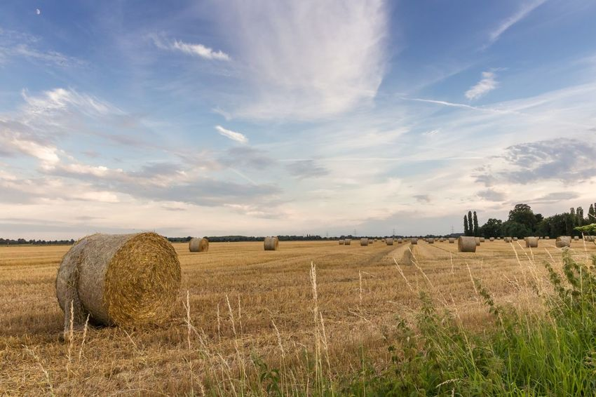 Late summer EyEmNewHere Eyem Nature Lovers  EyEmNature EyeEm Selects Bale  Hay Field Hay Bale Agriculture Rural Scene Tranquility Harvesting Tranquil Scene Nature Beauty In Nature Outdoors EyeEmNewHere