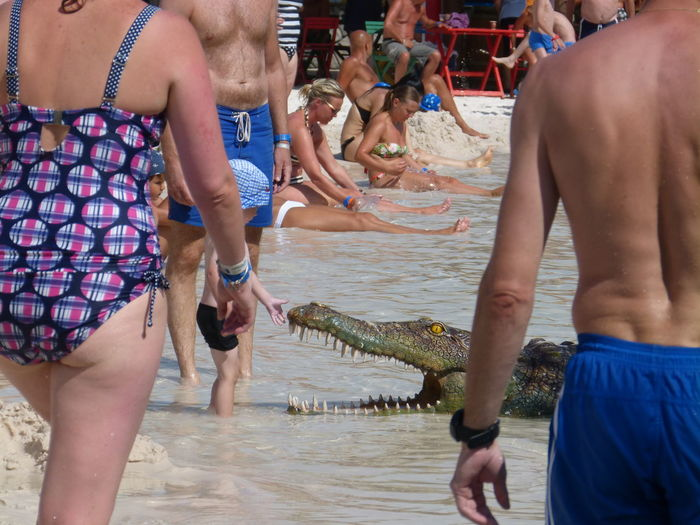 Boy touching crocodile in sea
