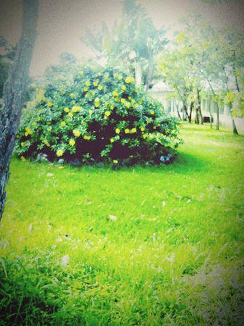 Flowers ✌
