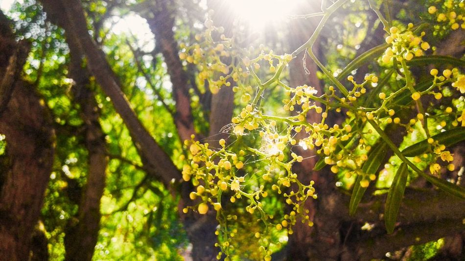 Nature Sunlight Growth Green Color Outdoors Tree Beauty In Nature Sunbeam Sun Forest No People Summer Close-up Day Freshness