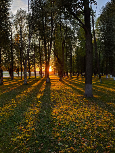 The autumn setting sun paints golden stripes on the grass in an urban park in the Russian city of Tver - Vertical Autumn Fall Beauty Autumn Beauty In Nature Change Environment Fall Golden Light Grass Landscape Nature No People Orange Color Park Plant Scenics - Nature Sunset Tranquil Scene Tranquility Tree Tree Trunk