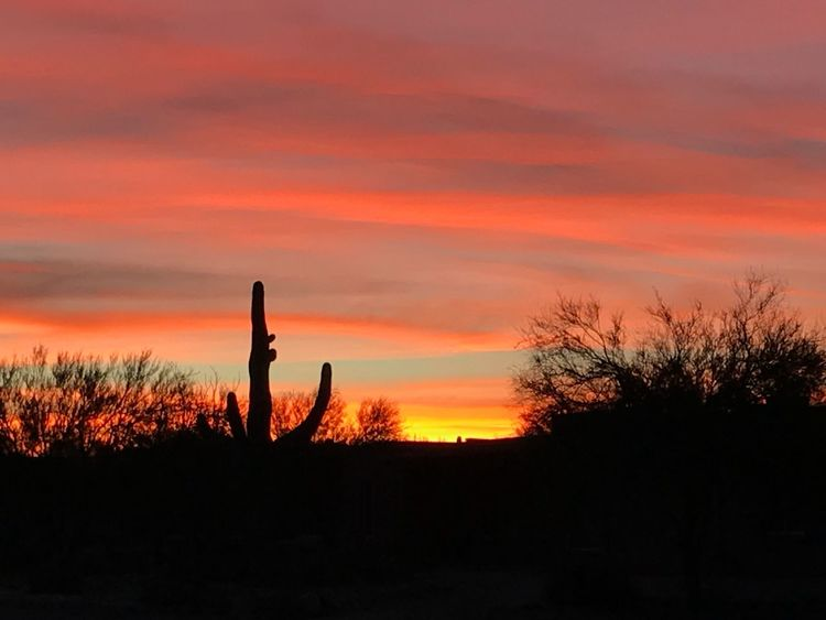 Sunrise Sunset Silhouette Beauty In Nature Tranquility Nature Saguaro Cactus
