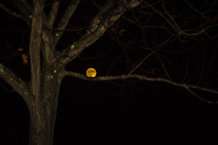 Astronomy Black Background Close-up Gateway Moon On A Branch Night No People Outdoors Supermoon Supermoon2016 Yellow