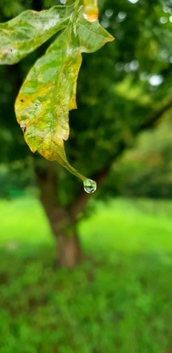 Leaf Water Drop Branch Close-up Grass Plant Green Color