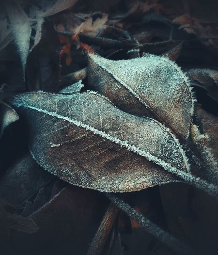 Leaves Macro Photography EyeEm Selects Frozen Nature Backgrounds Textile Full Frame Close-up Textured  Plant Bark