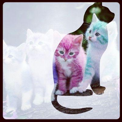 Cats LoveThem