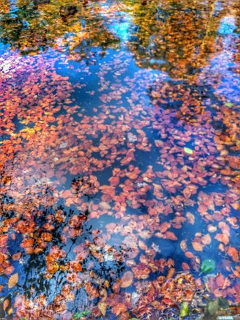 Autumn leaves Water Autumn High Angle View Reflection Nature Full Frame Leaf Beauty In Nature Day Outdoors Multi Colored No People Change Backgrounds Lake Scenics Close-up Autumn Enhanced Photograph EyeEm Gallery Eyeemphotography EyeEm Selects EyeEm Best Shots EyeEm Nature Lover Plant The Week On EyeEm