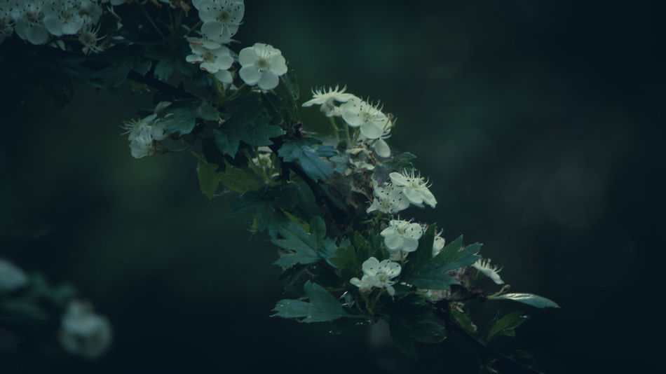 Beauty In Nature Botany Close-up Day Flower Flower Head Fragility Freshness Growth Leaf Nature No People Outdoors Plant Springtime Tree