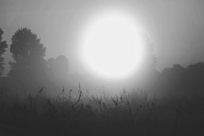 twilight zone Nature Photography Beauty In Nature Reinheimer Teich Foggy Foggy Morning My Place To Relax My Point Of View Tree Fog Sun Spooky Ethereal Sky Landscape Atmospheric Mood Shining Sunbeam