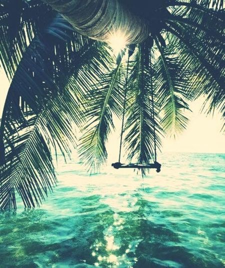Summer ☀ First Eyeem Photo Bië❤