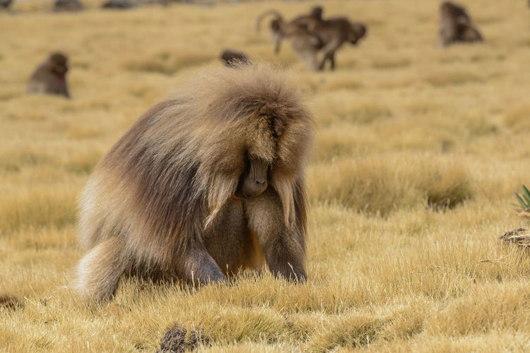 Monkeys on land