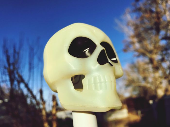 Plastic skull. Plastic Skull Skull Close-up Focus On Foreground Blue Tree Outdoors Sky Day Clear Sky No People