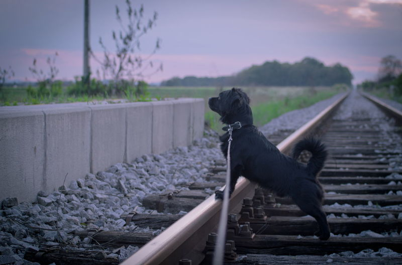 Side view of dog on railroad track during sunset