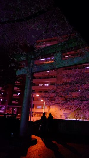 Showcase April Yozakura Nightphotography Night Lights Snapshot Silhouette Sakura Cherry Blossoms TORII Fujifilm Fujifilm_xseries XF16mmF1.4 Velvia Japan Photography Telling Stories Differently The Following Lovers