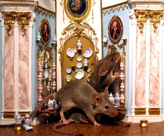 Anknabbern Eating Fressen Indoors  Kurios Kurioses  Maus Mouse Mouseaction Mouses Mause Odd Quaint  Quaint Animals Quaint House Quaint Mouses Rokoko Schloss Schräges Strange Strange Animals Strange Mouses Wandteller Here Belongs To Me