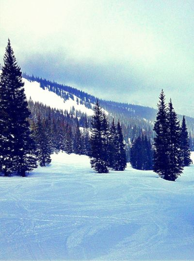 Aspen/Snowmass Ski Resort. Colorado, U.S.A. Nature Outdoors Beauty In Nature The Week On EyeEm Mobilephotography Travel Destinations Landscape Tree Lost In The Landscape Colorado Snowmass, Colorado WoodLand Winter Fog Mountain Aspen, Colorado Skiing Ski Snowboard Snowing Forest Frozen Trees Perspectives On Nature Snow