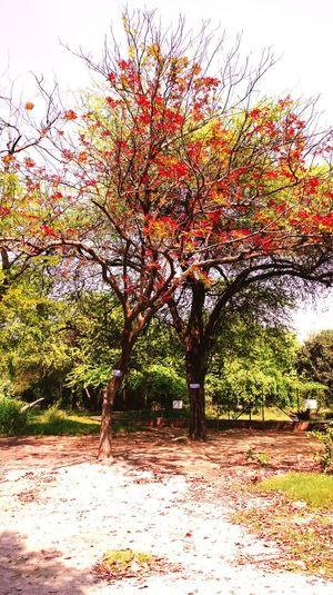 Naturelovers Natural Beauty Lightroom 5  Awosome Girl Soaking Up The Sun EyeEm Best Shots Open Edit USA New Delhi