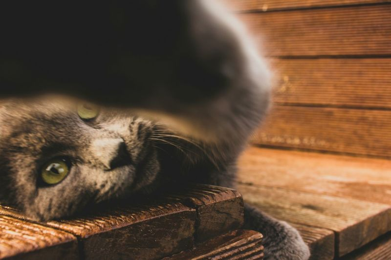 One Animal Pets Animal Body Part Domestic Animals Mammal Animal Themes Animal Head  Domestic Cat Animal Tabby Cat Day Cat Eyes Cats Of EyeEm Outdoor Photography Canon700D Turkey Outdoors Canonphotography January Sunny Day ☀ Beauty In Nature Winter Catlovers Cat Watching Paws