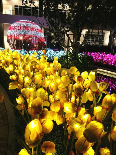 Flower Yellow Illuminated No People Outdoors Beauty In Nature Day Freshness Fragility Nature Close-up Flower Head Oo LED Flower LED Oo