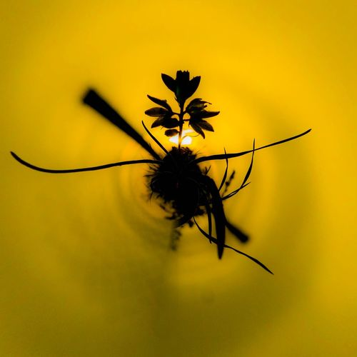 Happy sunset Tinyplanet Tinyplanets Tinyplanetfx Silhouettes Silhouette_collection Silhouette EyeEm Selects Insect Animal Themes Flower Head Blooming Single Flower