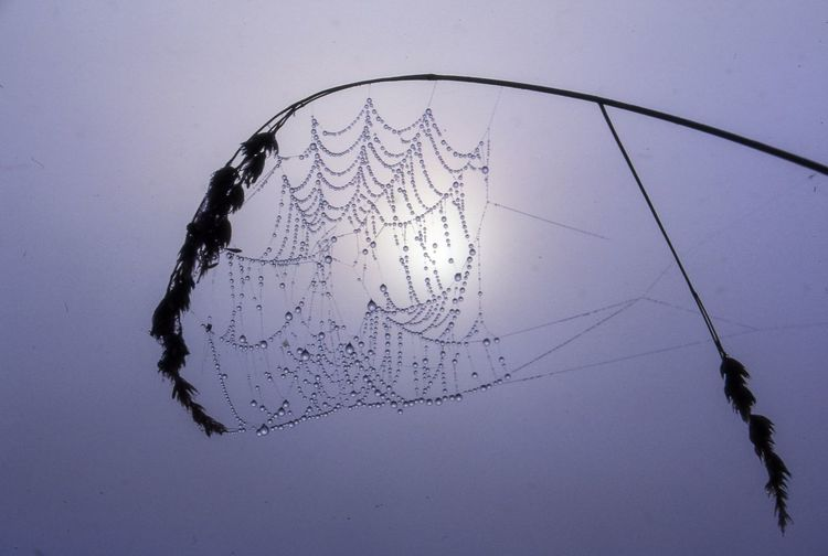 Close-Up Of Wet Spider Web On Plant Against Sky During Foggy Weather