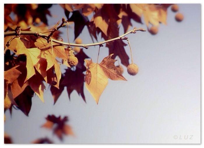 Otoño en el pensamiento. Autumn in thought. Nature Autumn Simplicity Nature_collection