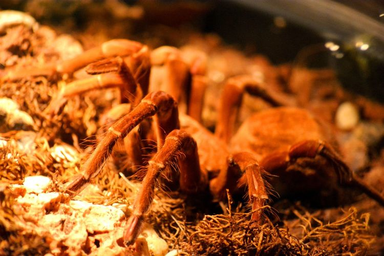 One brown spider in a box