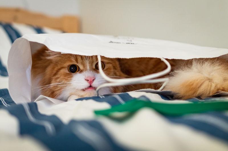 Cute ginger cat hiding in a paper bag.